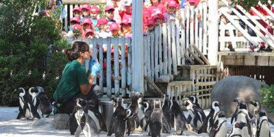 Pinguini_Gallery4