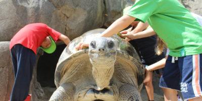A-tu-per-tu-con-le-tartarughe_1