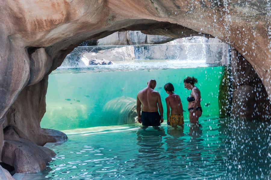 Zoom torino for Pesci finti per piscina
