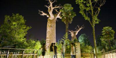 Madagascar_NightSafari_ZoomTorino (14)